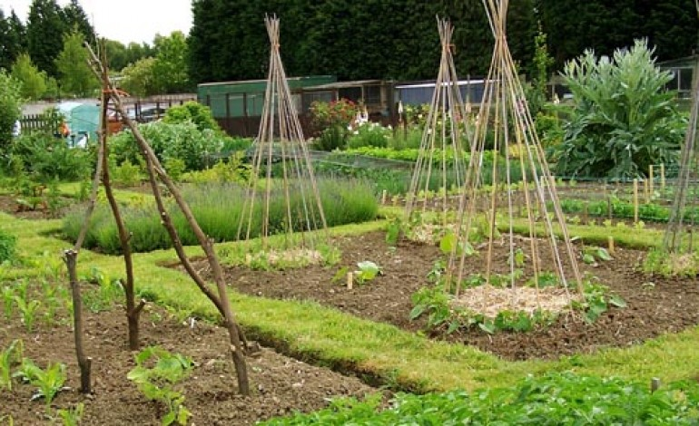 SUPPORT FOR ALLOTMENT LETTINGS AGENCY
