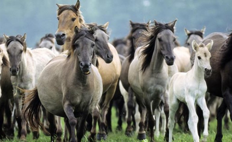 Police crackdown on stray horses