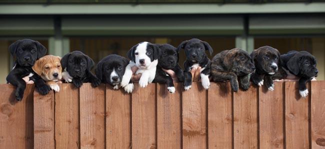Pups2 small