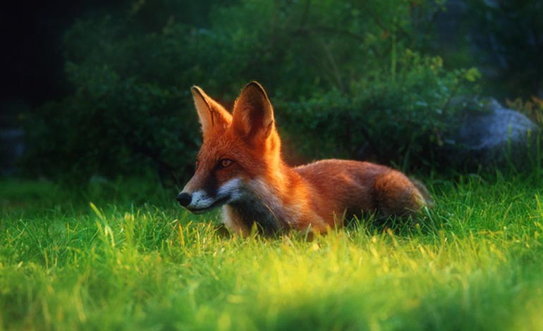 Government 'all over the place' on hunting bill, says our MP