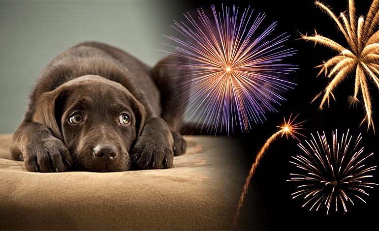 Bonfire Night: What you can do to help your scared pets