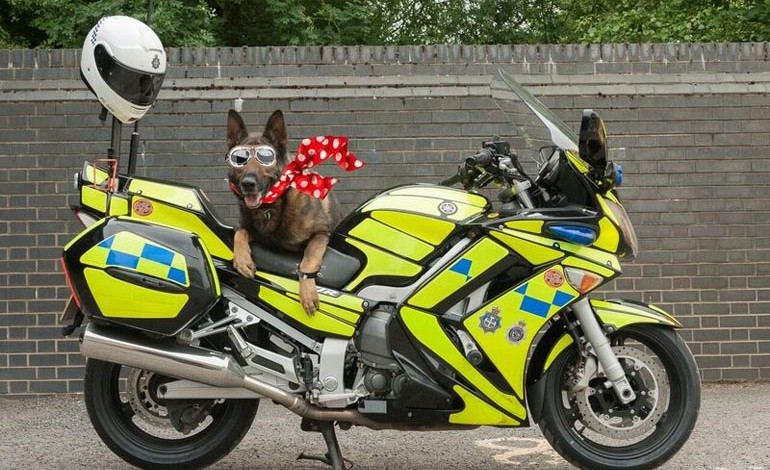 BikeWise promises to be just pawsome!