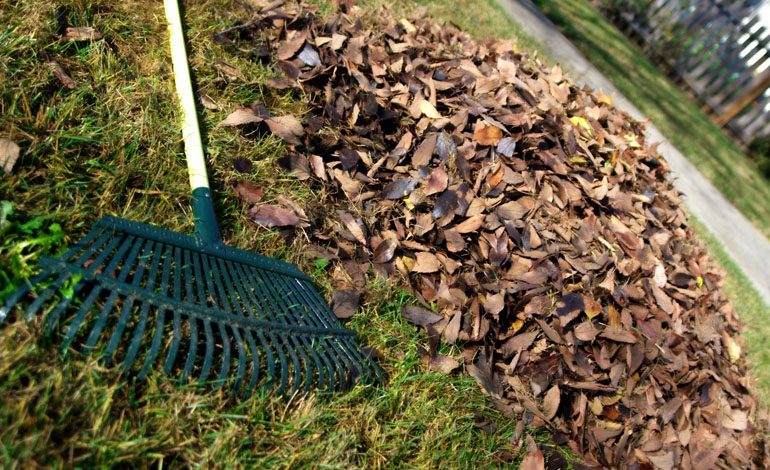 Apply to have garden waste collected in 2019