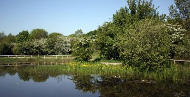 Free half-term family pond-dipping sessions in Aycliffe!