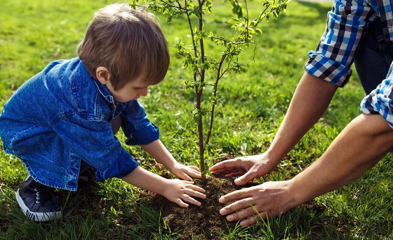 £150 grants to help plant new trees