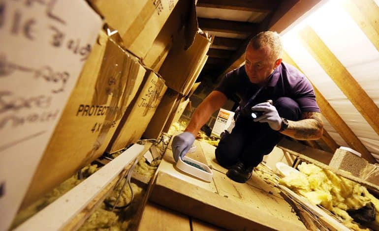 Pest control help for County Durham businesses