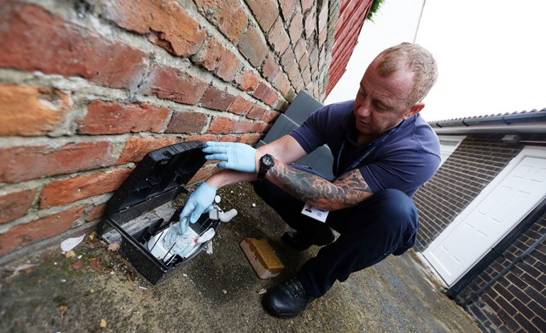 Pest controllers buzzing about new speedier services