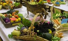 Aycliffe Horticultural Show 2019
