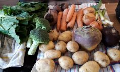 Aldi launches trial of plastic-free veg in Newton Aycliffe