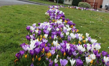 Colourful wildflowers return to County Durham