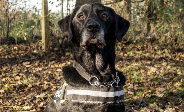 Police dog Jet retires