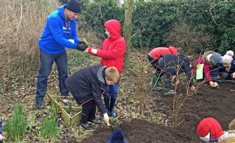 Aycliffe school creates own wildflower meadow to boost local ecosystem