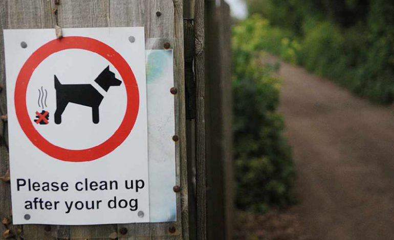 Have your say on dog fouling measures