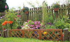 Search begins for County Durham's most improved gardens