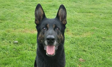 Could you give PD Buzz a forever home?