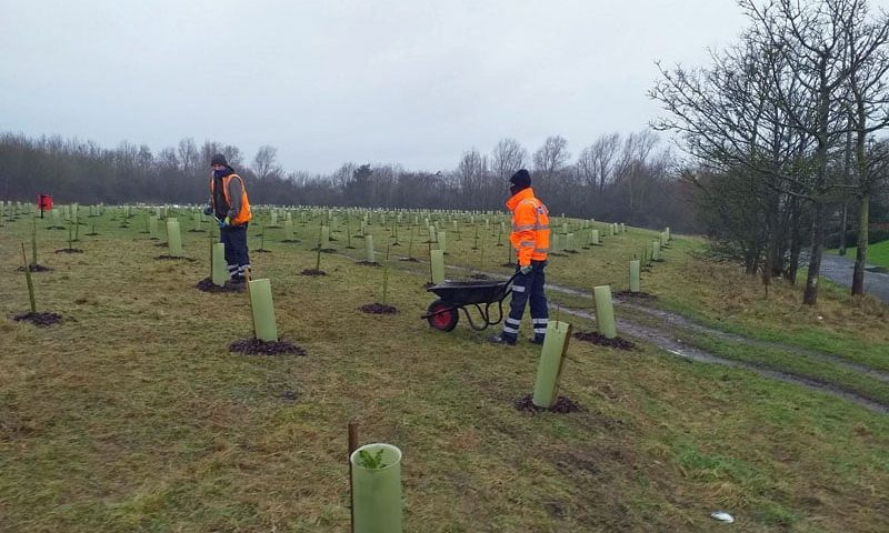 Tree planting scheme nears completion
