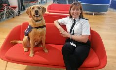 Four-legged friend joins police wellbeing team