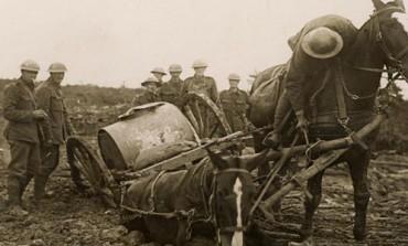 Durham War Horse exhibition