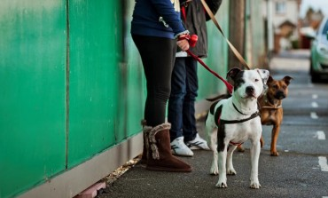 Youth workshops to dispel 'negative image' of dogs