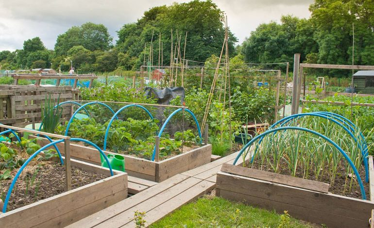 Have your say on allotment policy